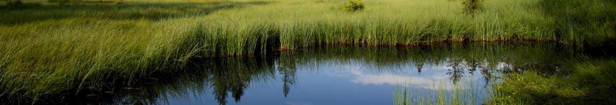 Réserve Naturelle Régionale de la tourbière des Saisies