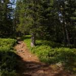 Sentier des arpelières