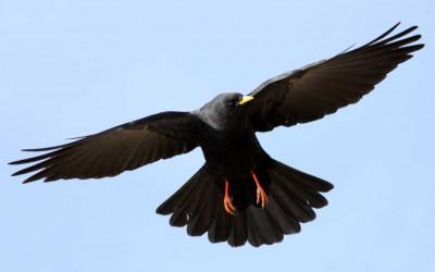 Mais quel est donc cet oiseau ?
