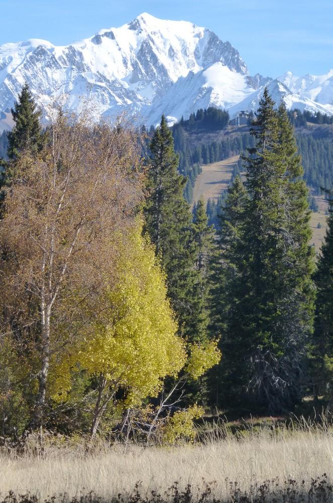 La tourbière en automne